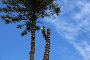 bankstown-tree-loppers